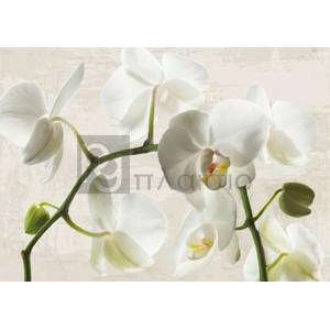 Jenny Thomlinson - Ivory Orchids