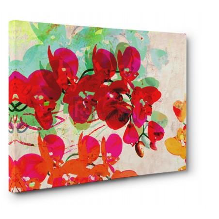 Kelly Parr - Orchidreams