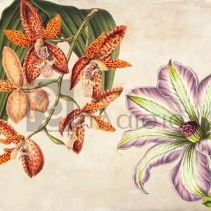 Remy Dellal - Panneau Botanique V