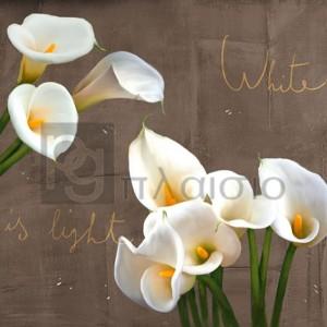 TEO RIZZARDI - White Callas