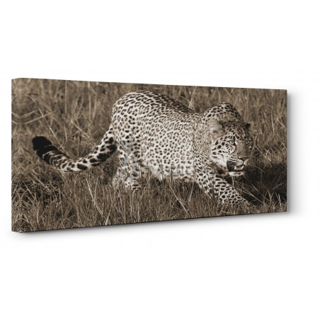 Pangea Images - Leopard hunting