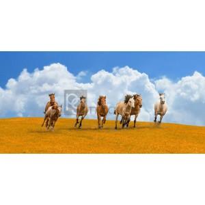 Pangea Images - Herd of wild horses