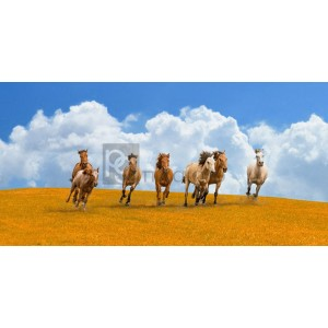 Pangea Images - Herd of wild horses