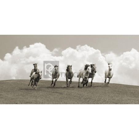 Pangea Images - Herd of wild horses (BW)
