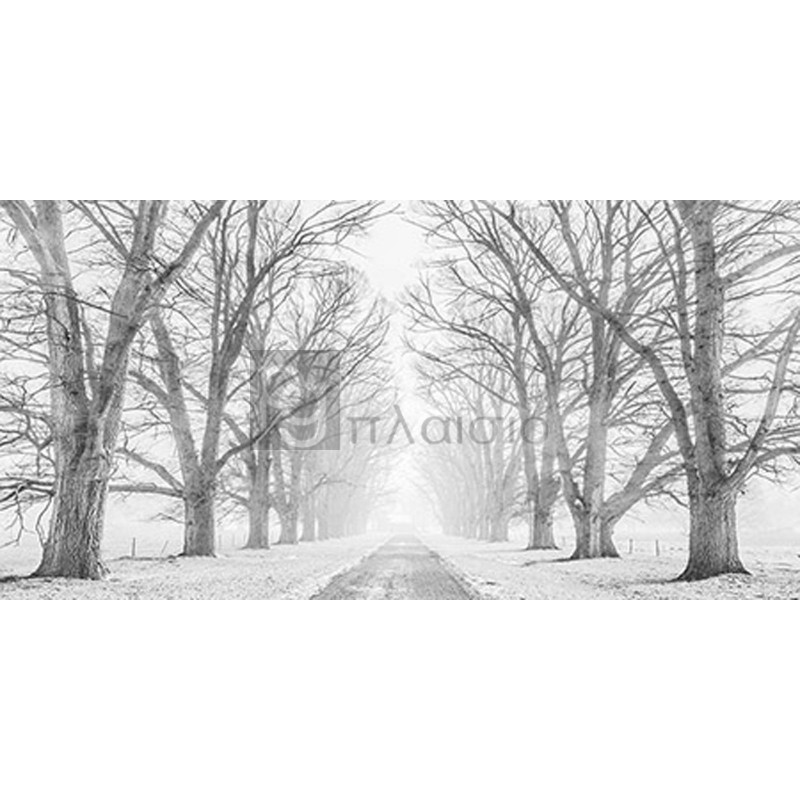 Pangea Images - Tree lined road in the snow