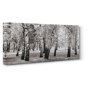 Pangea Images - Birches in a Park