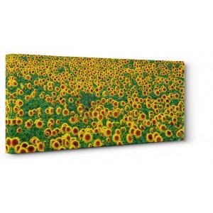 Frank Krahmer - Sunflower field, France