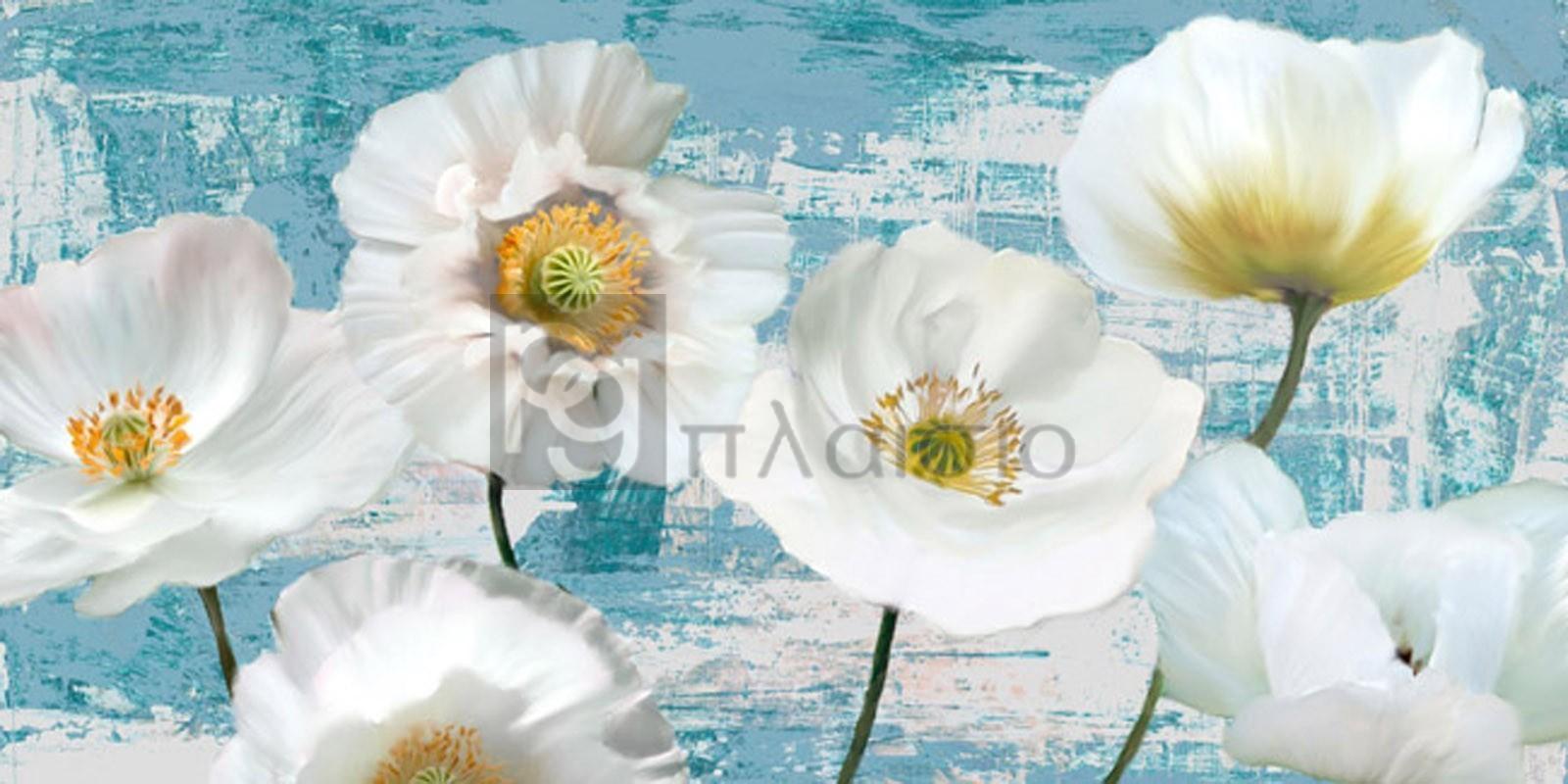 LEONARDO SANNA - Washed Poppies (Aqua)
