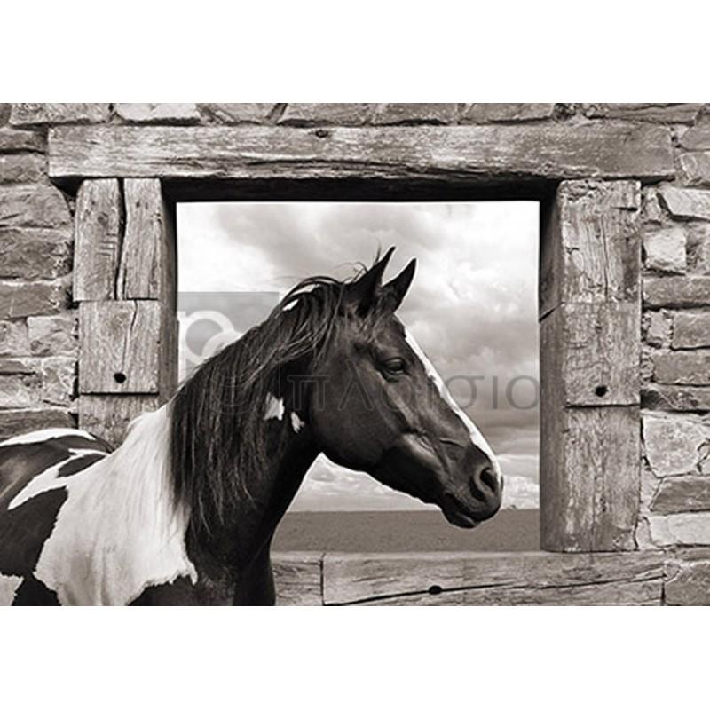 JULIAN LAUREN - Painted Horse (BW)