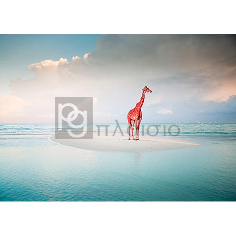 ARLO WREN PHOTOS - Oceanic Savannah