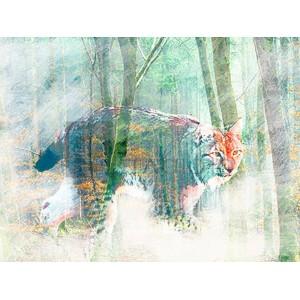 ARLO WREN PHOTOS - Silent Hunter