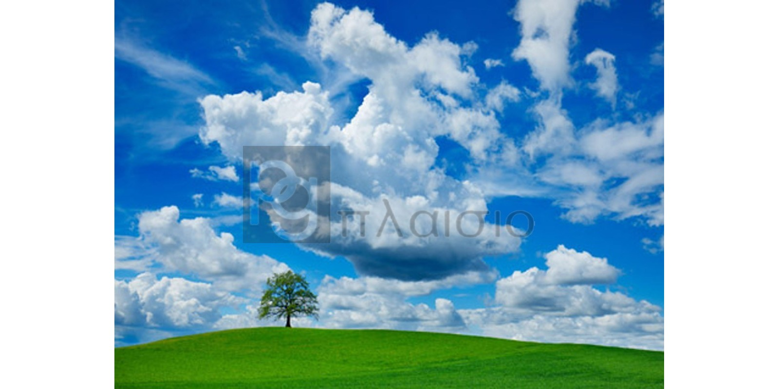 FRANK KRAHMER - Oak and clouds, Bavaria, Germany