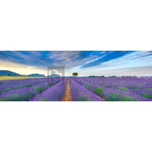 FRANK KRAHMER - Lavender Field, France
