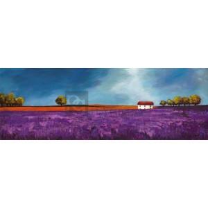 Philip Bloom - Field of lavender