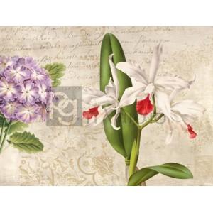Remy Dellal - Botanique Moderne III