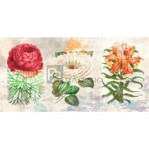 Eric Chestier - Hortus Botanicus 2.0
