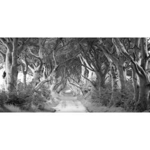 Pangea Images - The Dark Hedges, Ireland (BW)