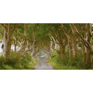 PANGEA IMAGES - The Dark Hedges, Ireland