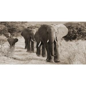 ANONYMOUS - Herd of African Elephants, Kenya