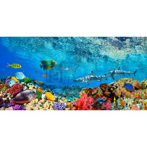 PANGEA IMAGES - Reef Sharks and fish, Indian Sea